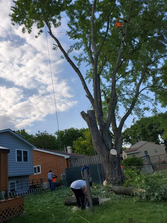 Busy Beavers Tree Service Amp More Tree Service